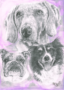 Graphite drawing of 3 dogs' faces with a purple background.