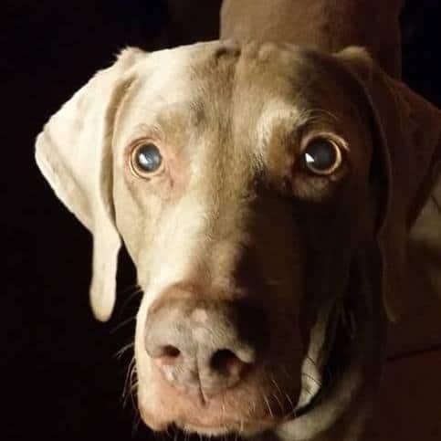Head shot of a dog